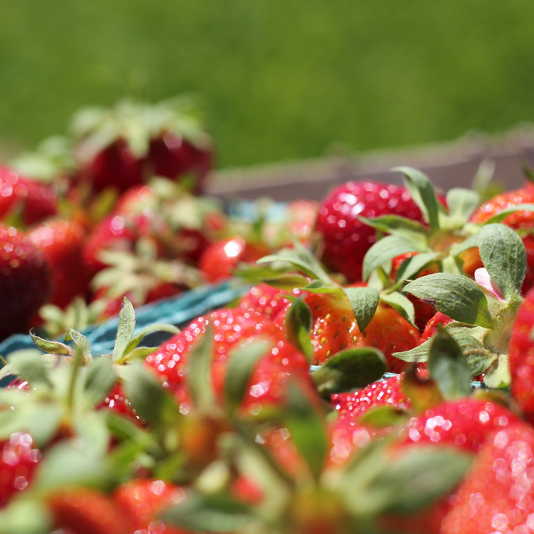 Pick Your Own Strawberries, Monday 6/29