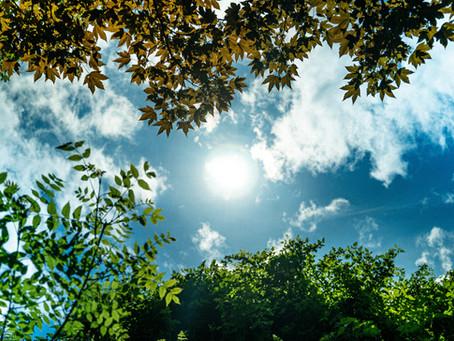 Sunlight & Serotonin