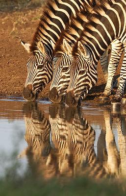 MADAGASCAR%20STRAND%20MAKI_edited.jpg