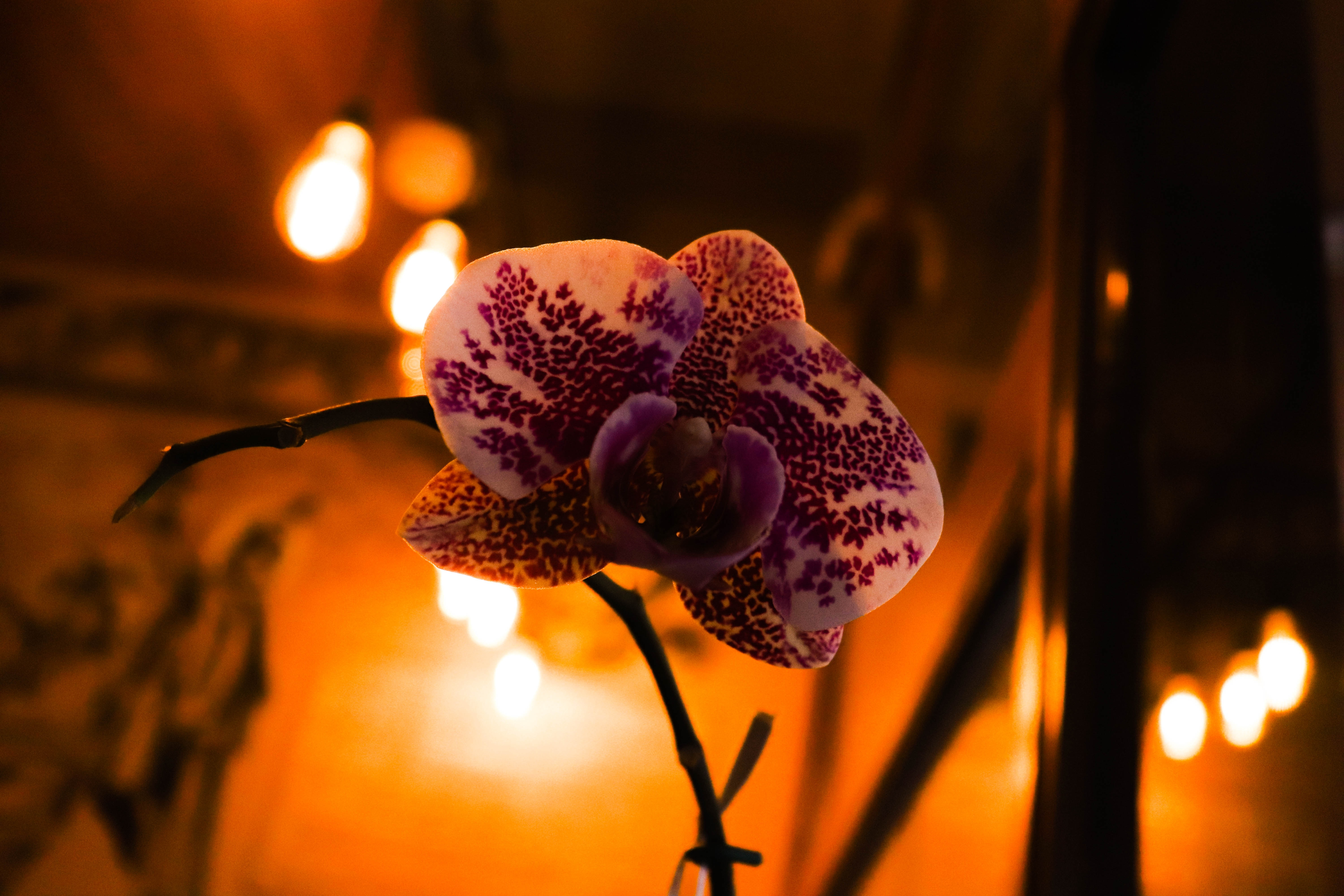 Orchid & candle