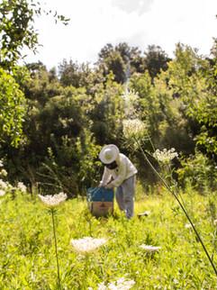 Image de Bee Naturalles