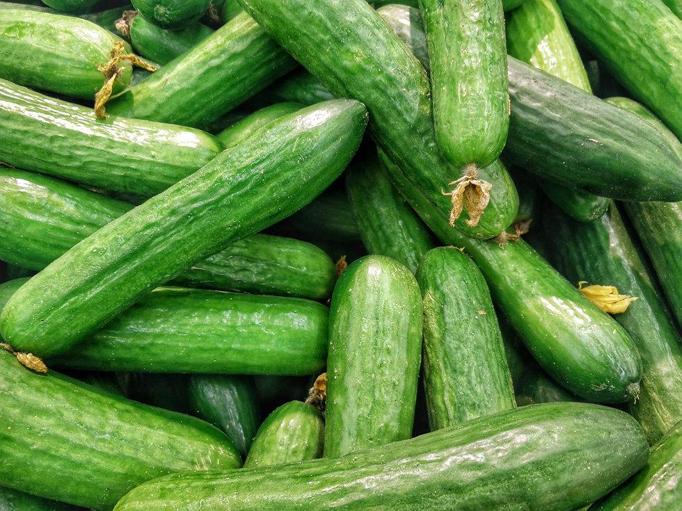 Monta vihreää tuoretta ja raikasta kurkkua.