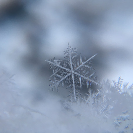 Sunday Inspiration: The Beauty of Individual Snowflakes