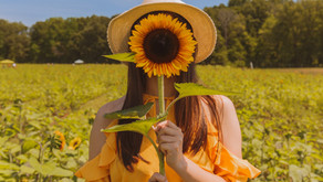 New Jersey Sunflower Farms Worth a Visit!