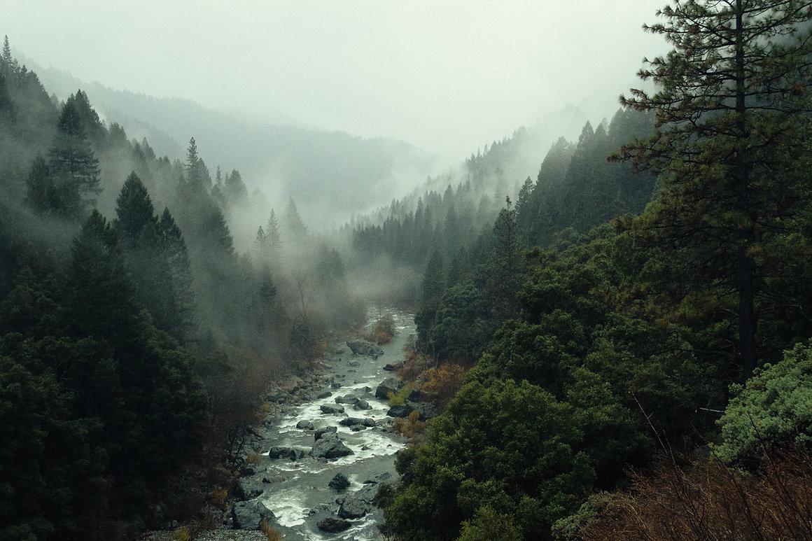 Image de pine  watt