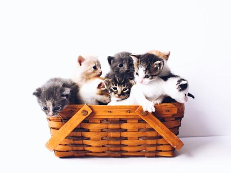 """Gatos """"ajuízam"""" ação contra condomínio que veta presença deles"""