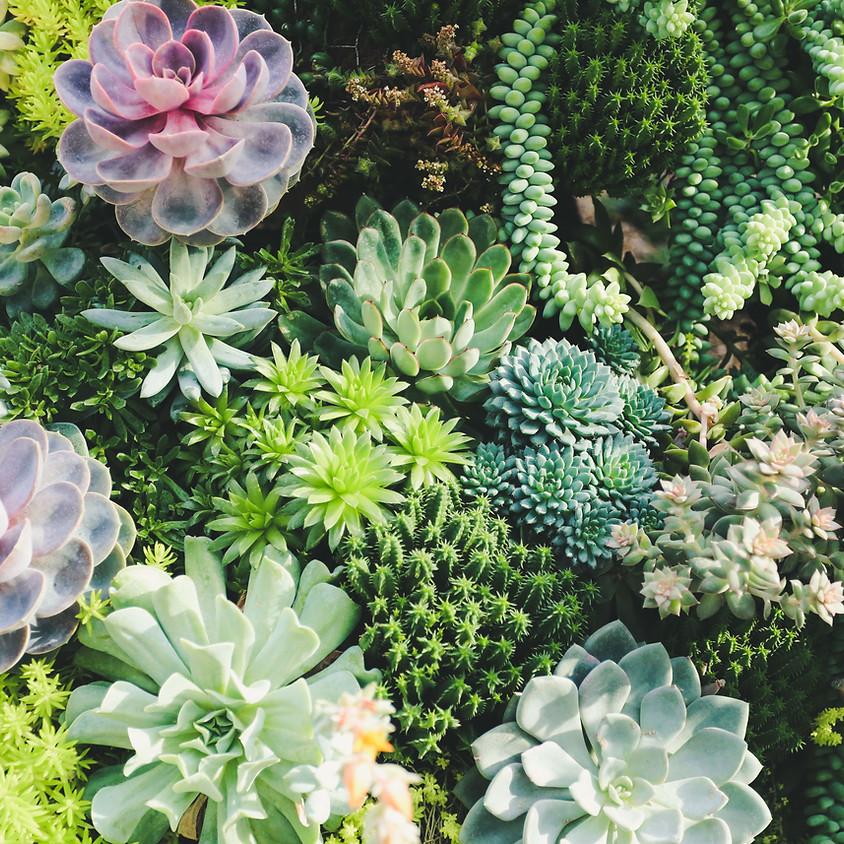 Sunday Succulents and Tea Tasting w/ FarmerJawn