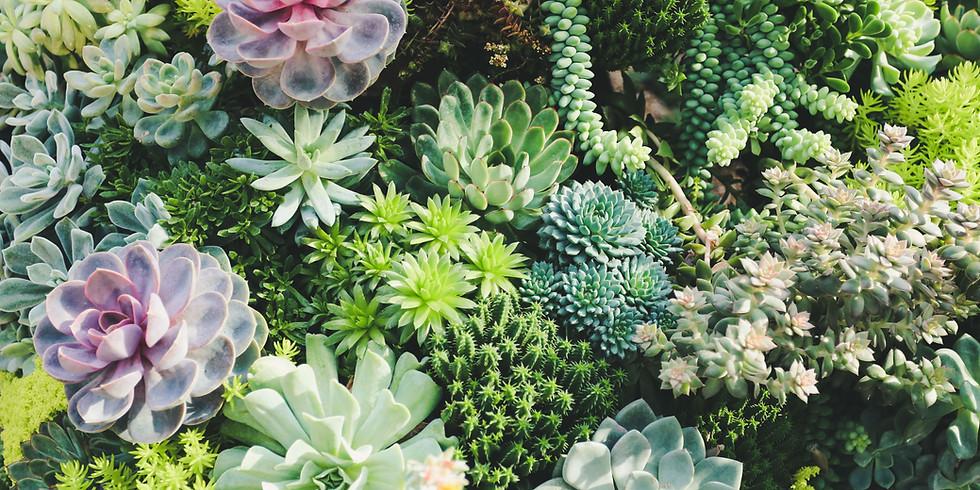 Succulent Party