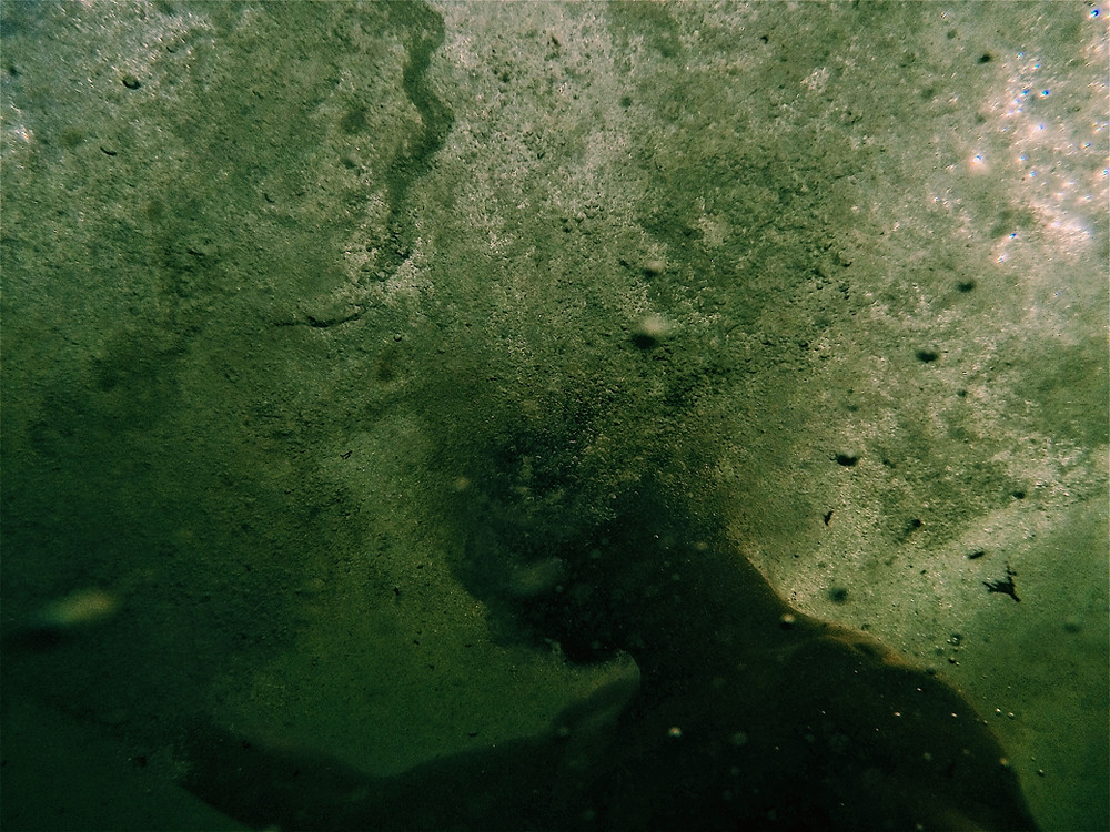Person submerged in algae water