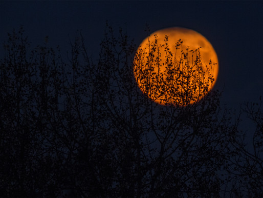 Halloween, Samhain & Wicca