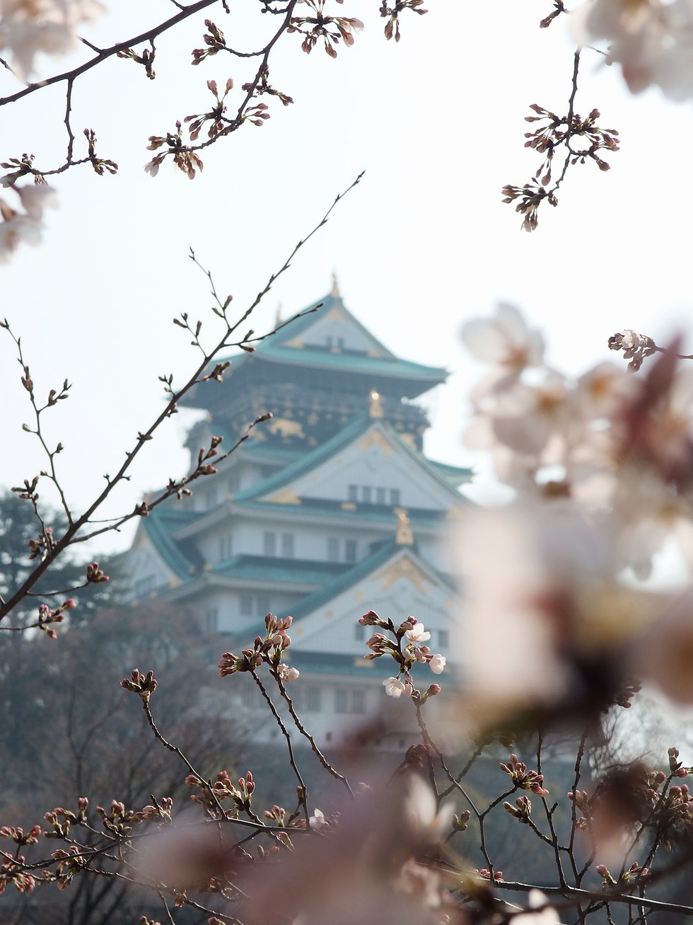 Image by Yu Kato