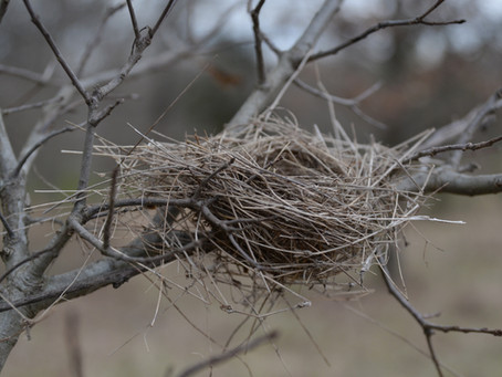 Life Changes: empty nest