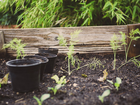 Composting 101: How to Grow Compost in Your Background