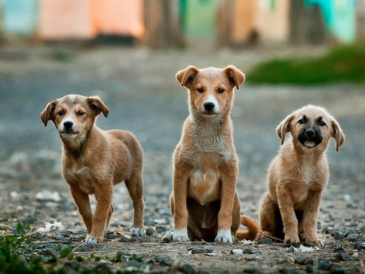 Treat Others as Our Dogs Treat Us this New Year