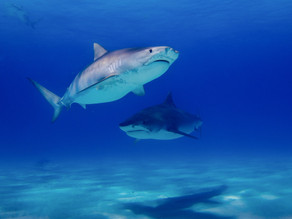 Are There Sharks Lurking In Your Home?