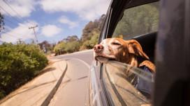 Tips para viajar con tu mascota