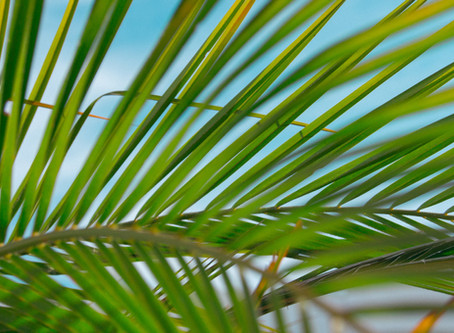 Self-Guided Liturgy: Sunday of the Passion: Palm Sunday