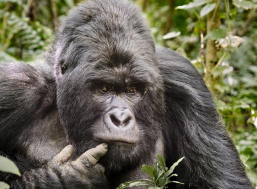 Gorilla Packing List