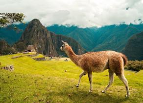 COVID-19 - Peru Still Closed