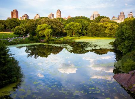 Una giornata a Central Park: le 10 attrazioni (+1) da non perdere!