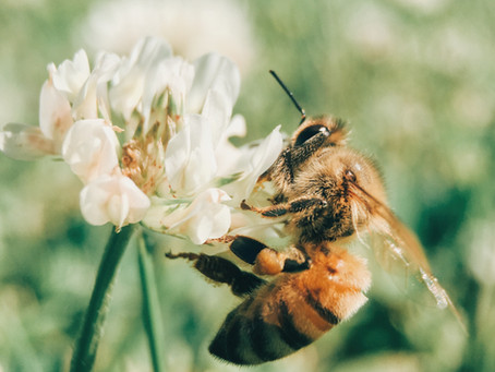 Lessons from the Bee