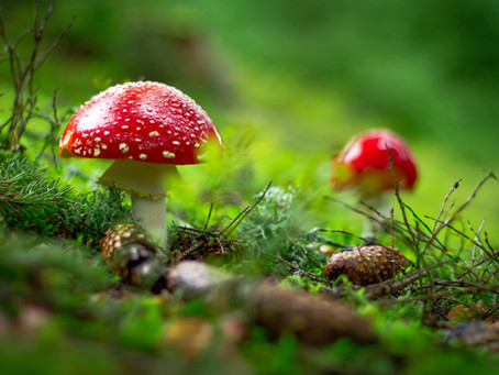 Got Fungus? Ten Tricky Signs of Chronic Fungal Overgrowth