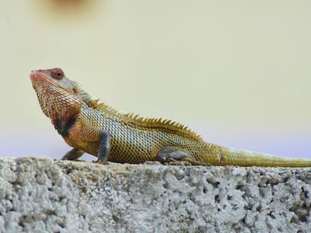 Reptile List 4/7/21