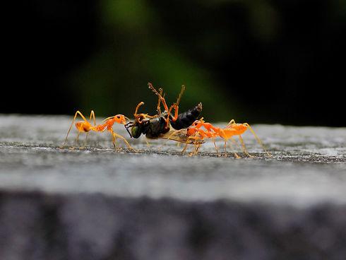 Image by Parvana Praveen