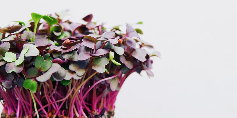 Growing Great Microgreens 5:30pm-6:30pm