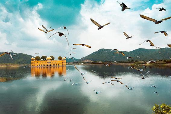 Image by Aditya Siva
