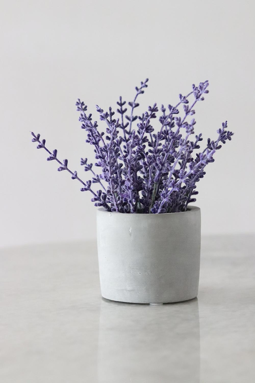 Lavender for hair | M.A.D Organics
