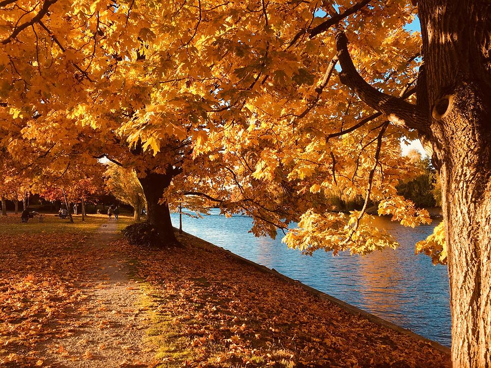 Il foliage si può ammirare anche in un parco o tra i viali alberati in città