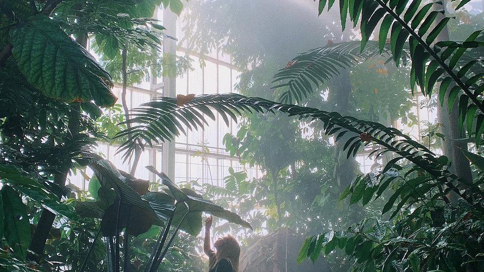 Dancing Through the Jungle