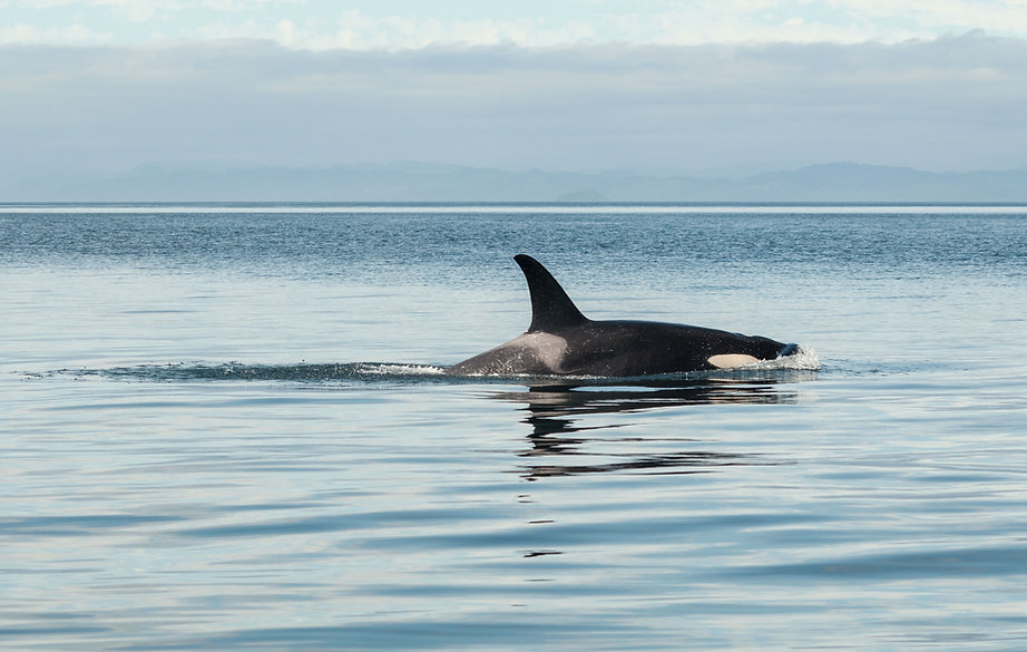 Whale watching tours Victoria BC