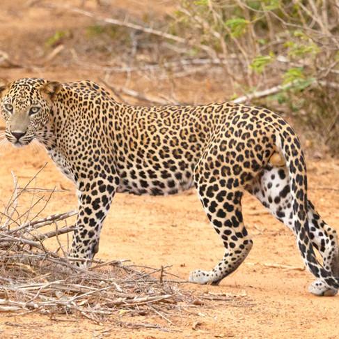 Wildlife Highlights of Sri Lanka