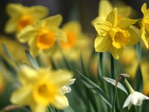 Sunday 18th April Sermon and Prayers