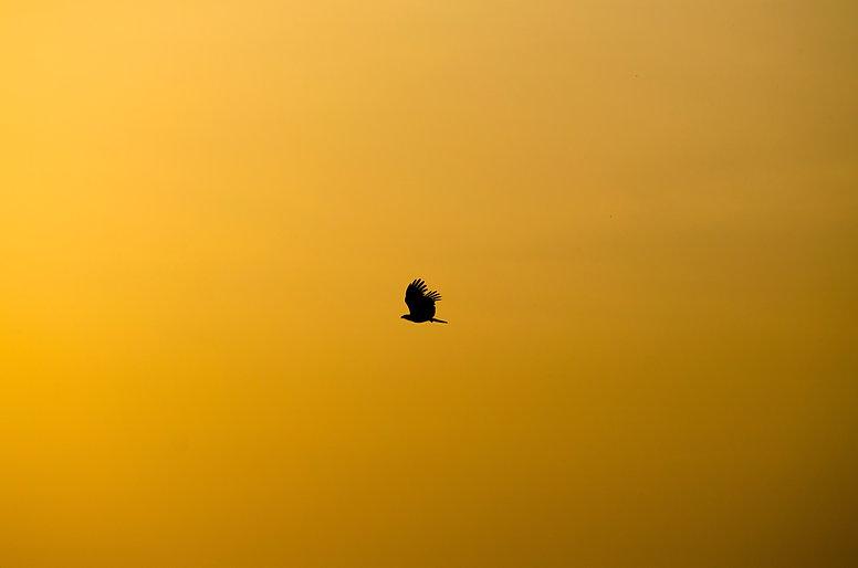 Image by Shreyas Malavalli