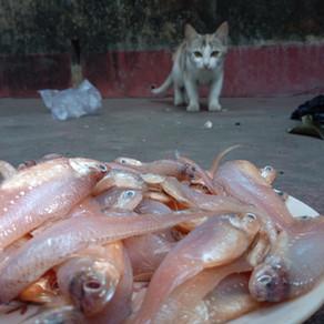 L'alimentation naturelle chez le Chat.