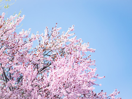 Spring Term at RMS