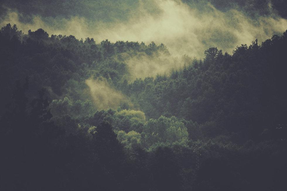 Ariodante green Travel Initiative - Beautiful Forest with fog