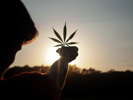 Himachal On Its Way To Legalising Cannabis Cultivation