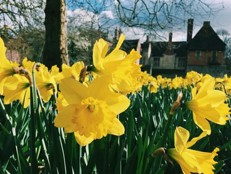 Daffodils make you smile