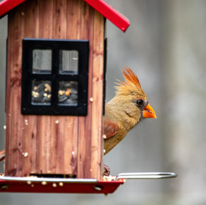 Bird Feeders - Connecting with Local Wildlife