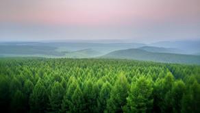 Peers pass 14 amendments on Environment Bill