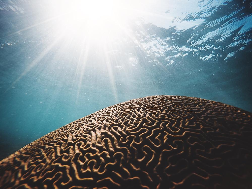 Underwater Brain Coral