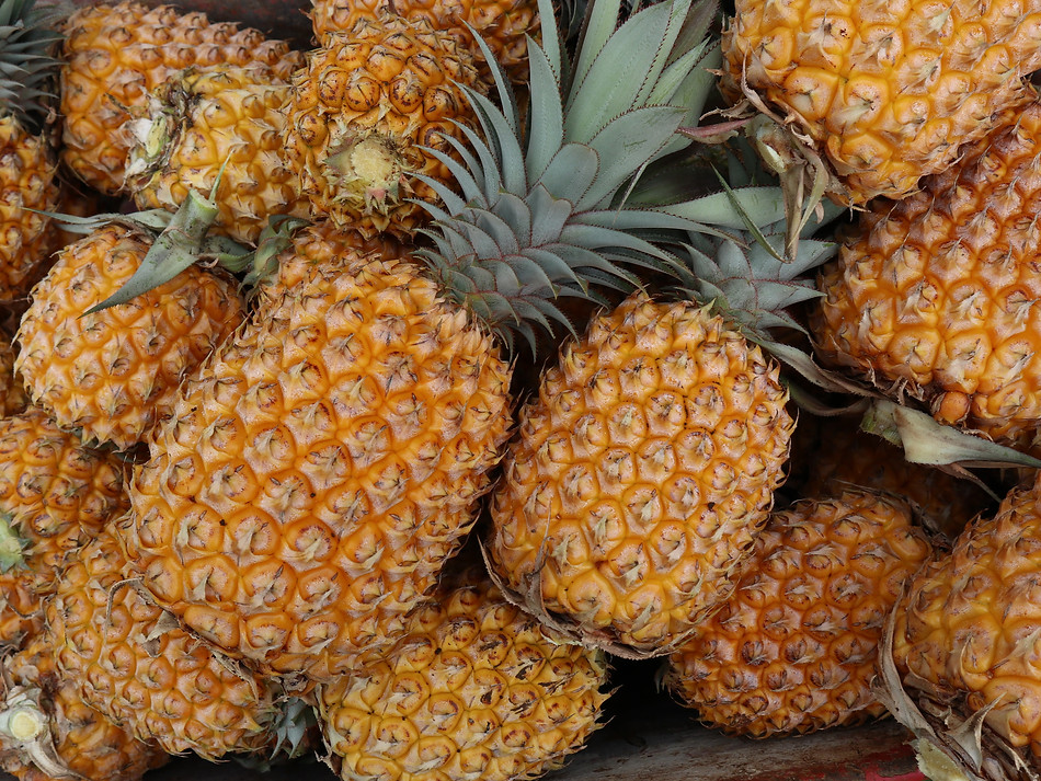 Grown your own pineapples