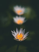 Image by Sachin Amarasinghe
