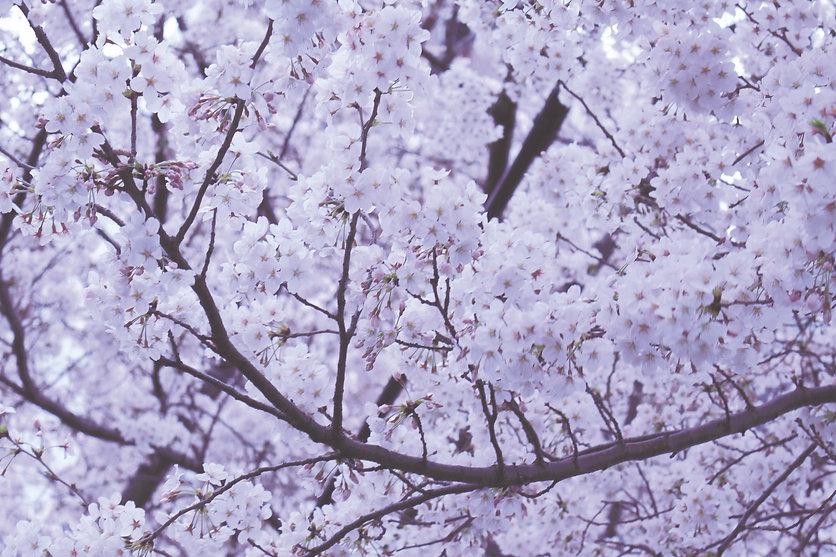 Image by Yuki Yoshida