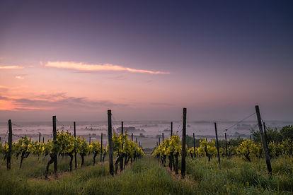Vanorel - Les vins de Loire