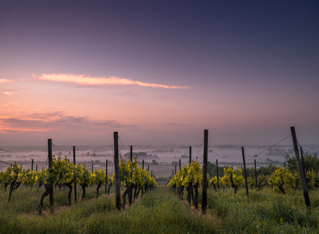 The Adventure of Discovering Boutique Vineyards